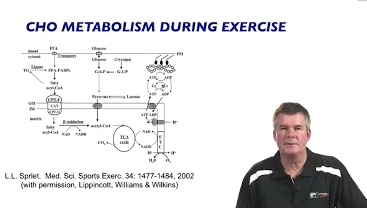 exercise physiology › education › exercise & metabolism., Muscles